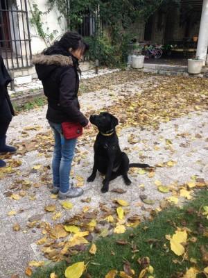 Adiestramiento Canino Madrid