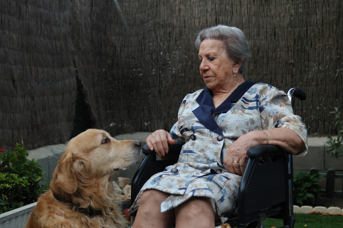 terapia asistida por perros, intervenciones terapeuticas, perros de terapia