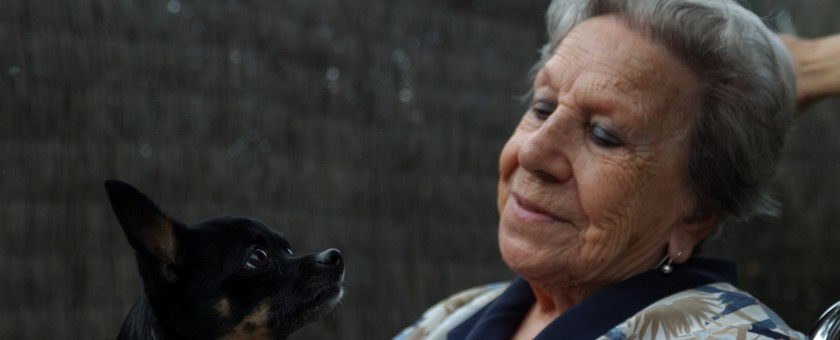 intervenciones asistidas por perros