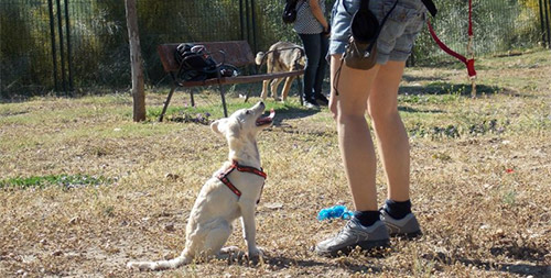 Residencia Canina Mostoles