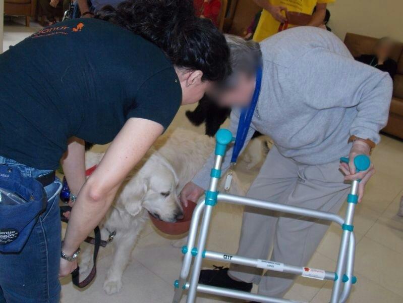 sesiones de terapia con perros