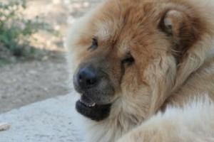 razas nordicas, educación especial canina Torrejon