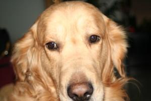 madrid y guadalajara, educación canina y residencia